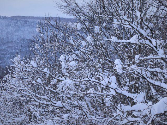 北海道の仕事と暮らし63 天然林経営