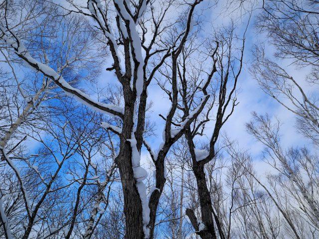 北海道の仕事と暮らし64 先見力とビジョン