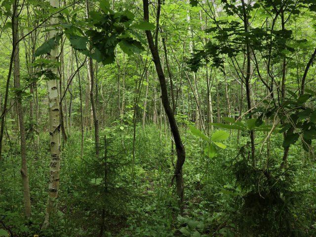 経営指針の話34 経営指針は森に戻す活動に似たり
